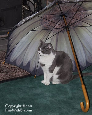 gray and white cat sitting under a wet umbrella by the woodstove
