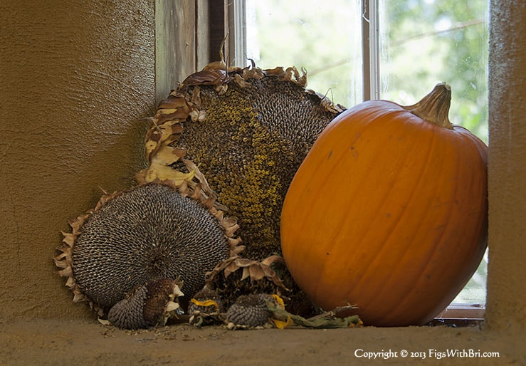 sunflower seed heads and orange pumpkin