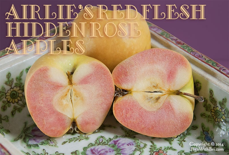 hidden rose airlie's red flesh apples